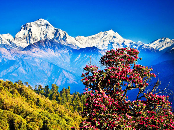 Nagarkot Tour in Nepal