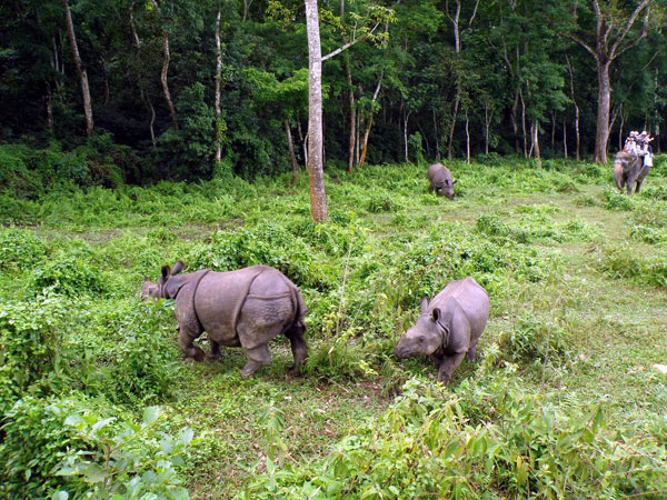 Sightseeing in Chitwan National Park